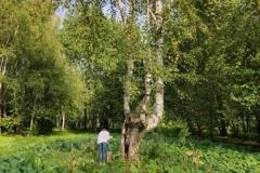 Взятие КП у дерева